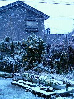 金沢の新年は雪